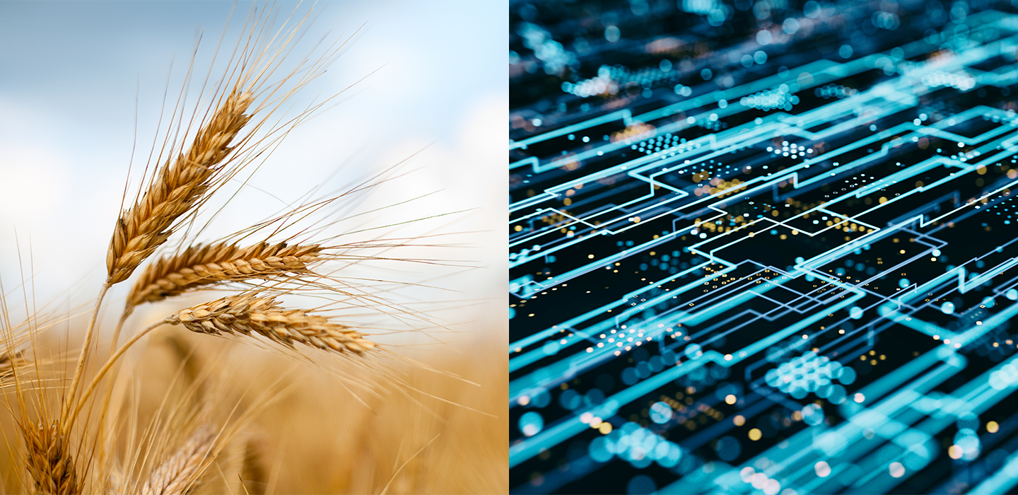 Grains on a cornfield and circuit board